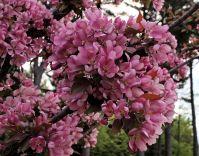 Fleur Pommetier Makamik.