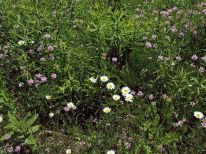 Un arrangement naturel de fleurs des champs.