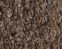 Écorce endommagée du hêtre par le mycélium de l'amadouvier dont on distingue les points blancs.