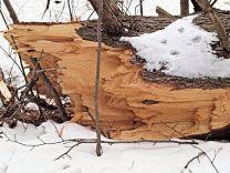 Brisure de la partie basse de l'arbre.