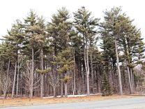 Bouquet d'arbres adultes à l'entrée du domaine